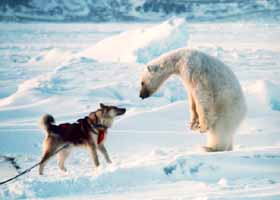 PolarBear with Mountain Dog